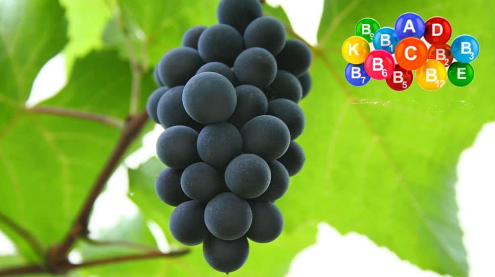 szőlő_fitsmile